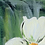 Thumbnail: WILD MOONFLOWER | Limited Edition Fine Art Print