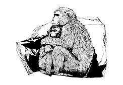 Monkeys Sketch
