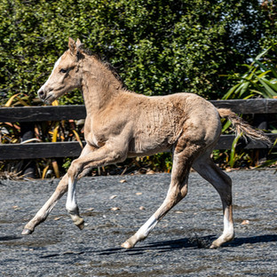 2019 Foals