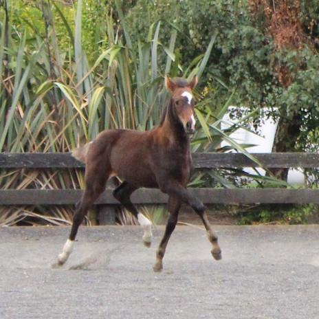 2018 Foals