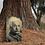 Thumbnail: Grabmal Portrait, Messing