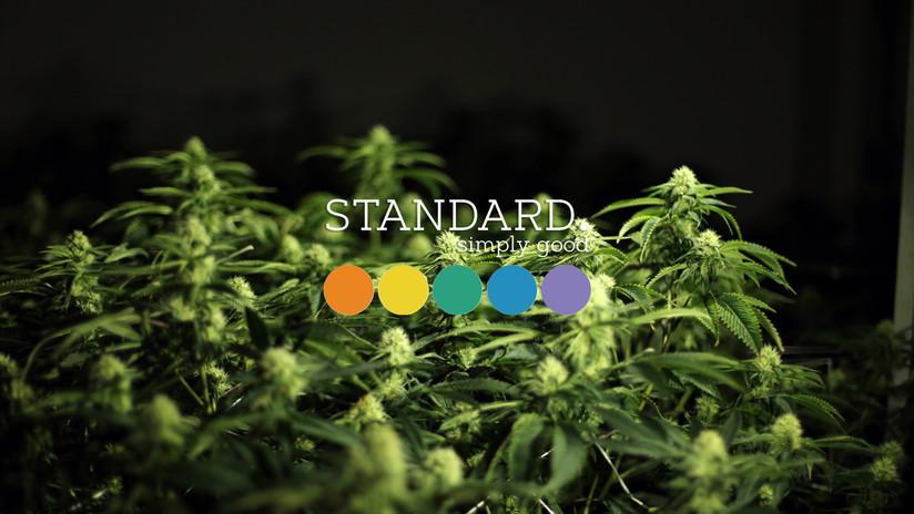 Standard Cover.jpg