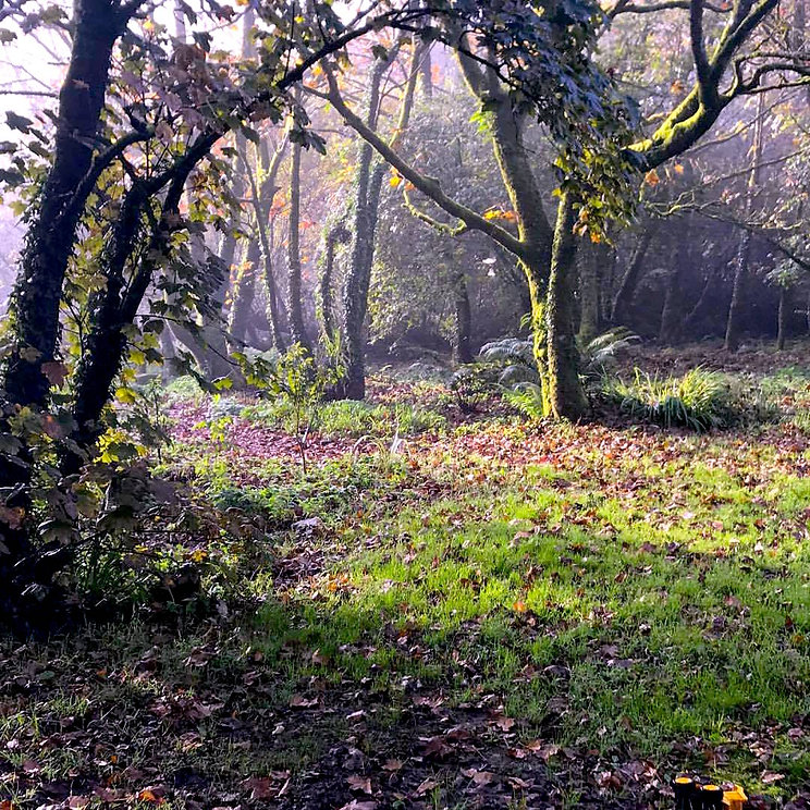 Woods at Willow Tree holistics