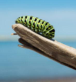 caterpillar-1209834_1920.jpg