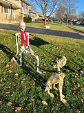SkeletonwithDog.jpg