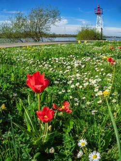 Bords de Loire au printemps