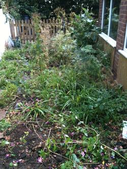 overgrown garden before patio