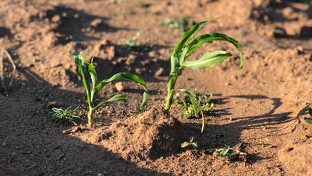 Summer Solstice & Planting