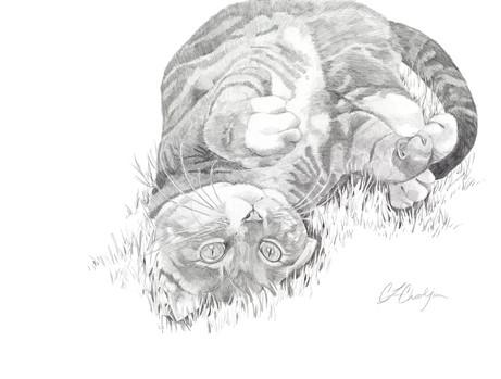 pencil pet portrait, gray tabby cat