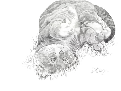 pencil pet portrait, gray tabby cat