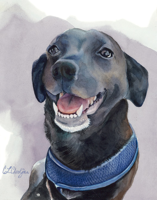 watercolor pet portrait, dog, black labrador
