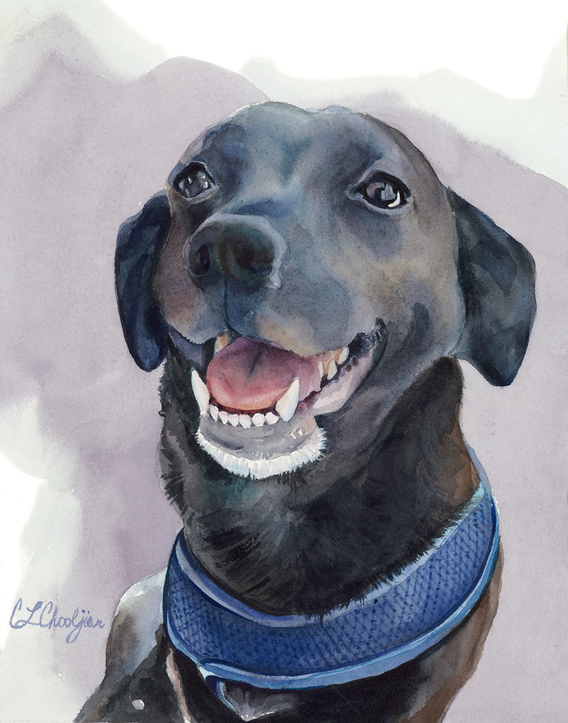watercolor pet portrait, dog, black labrador