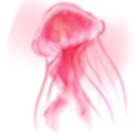 digital painting of a jellyfish, south american sea nettle, pink