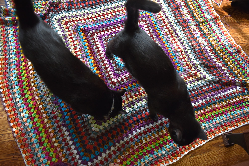 Black cats on multi-colored crochet blanket