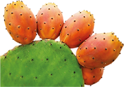 Rica Opuntia logo