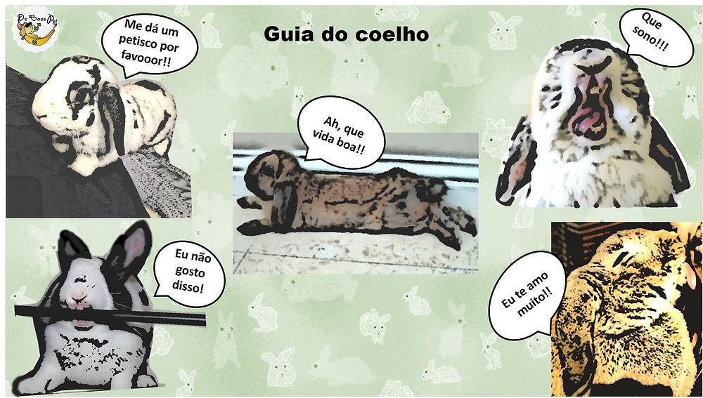 guia comportamental do coelho