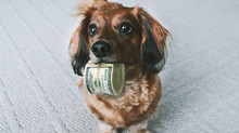 Custos mensais para manter o seu pet