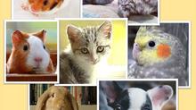 7 pets perfeitos para ter em apartamentos