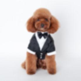 dog-apparel-pet-clothes-large-cute-pet-dog.jpg
