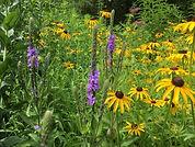 Custom+wildflower+meadow.jfif