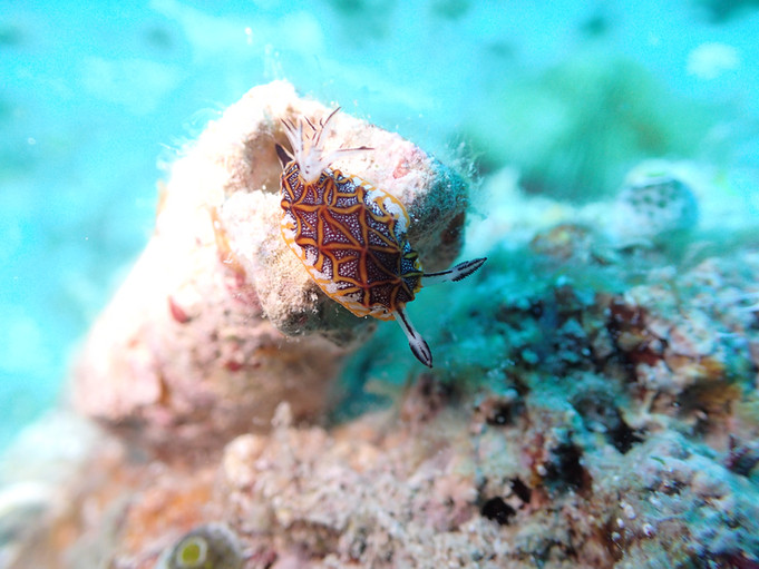 Diving 晴天の沖縄