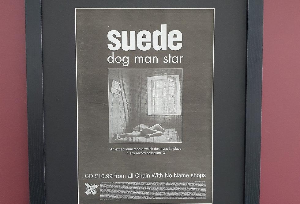 Suede Dog Man Star framed promo advert