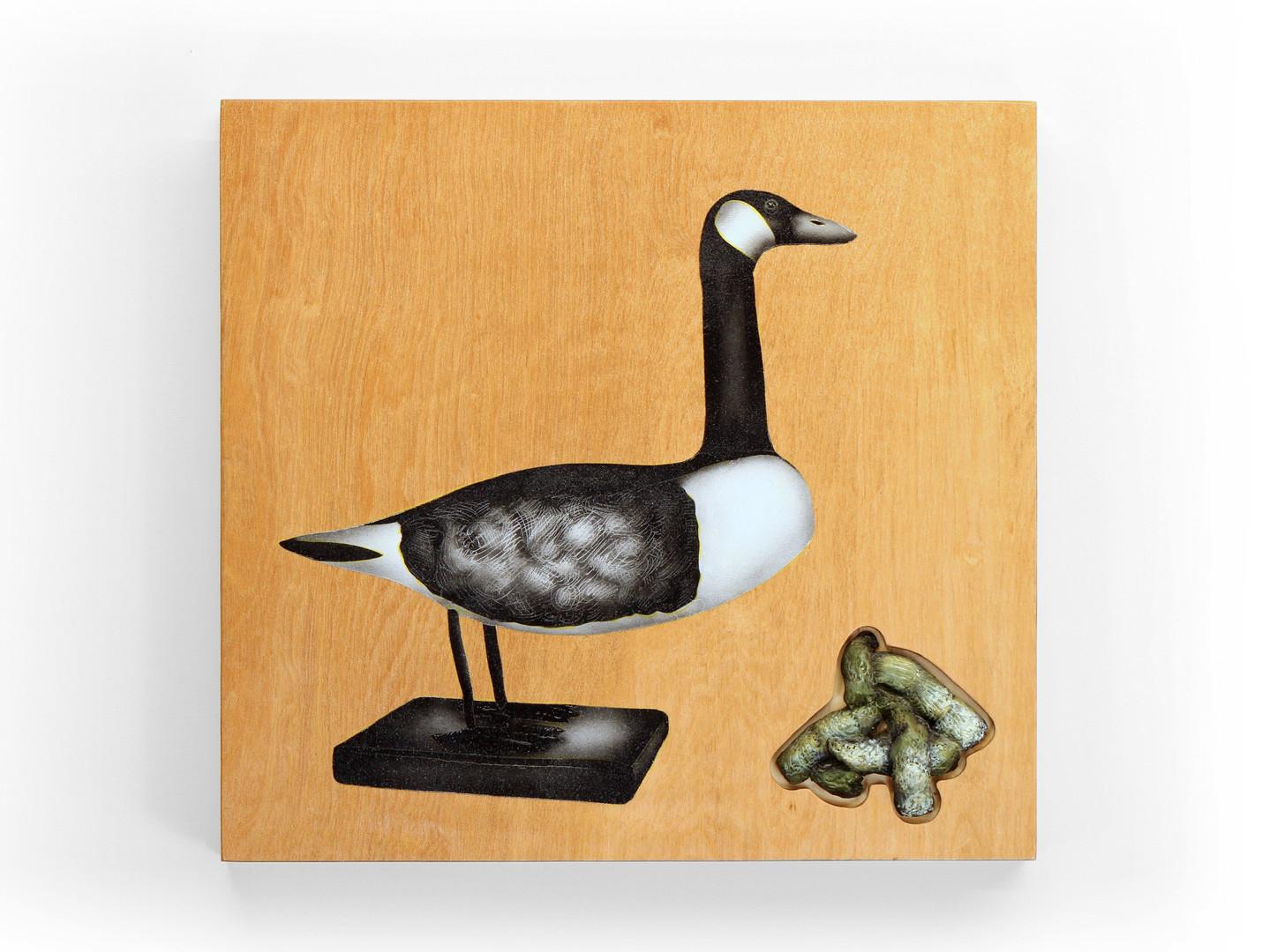 CanadaGoose(Bird)I.jpg