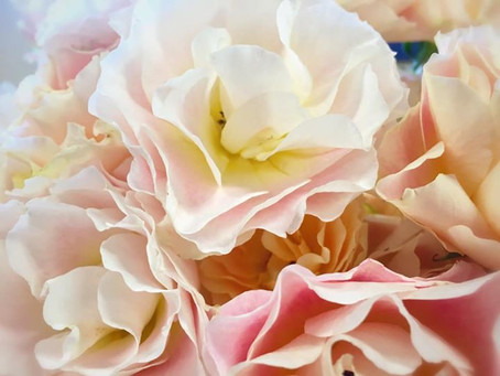 薔薇がいっぱい