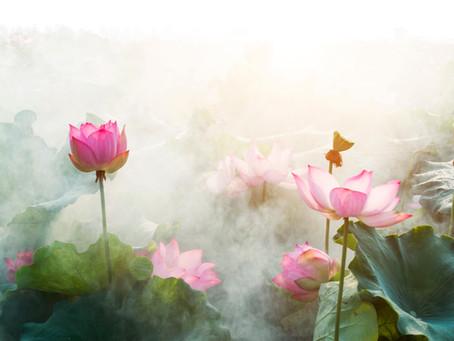 山羊座満月(月蝕)の花読み*星読み