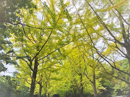 秋がきていたよ 熱田神宮