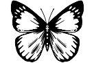 butterfly icon.jpg