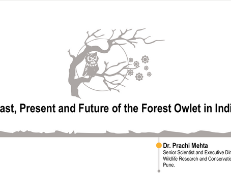 Past, Present and Future of Forest Owlet in India