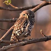 07-SM-owl-2.jpeg