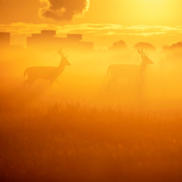 Sunrise Fallow