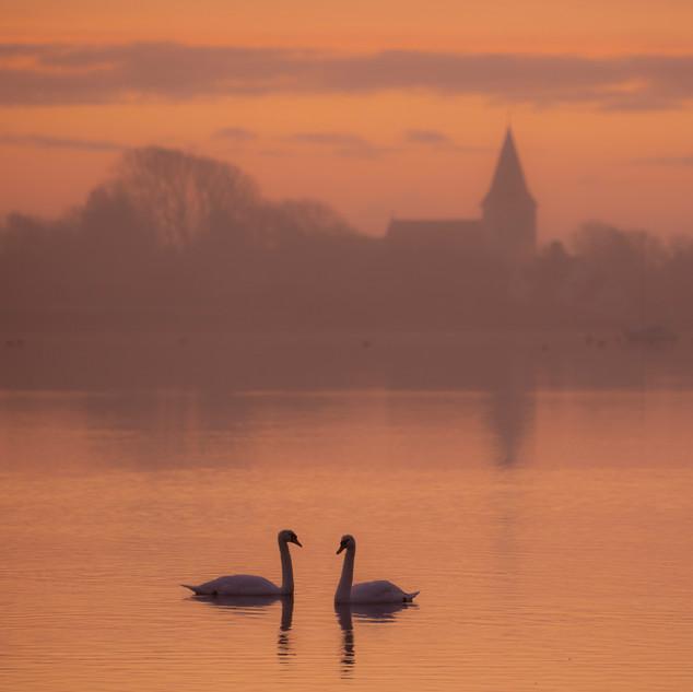 Sunrise swans