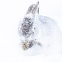 Hopeful hare
