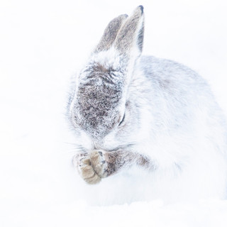 Hopeful hare