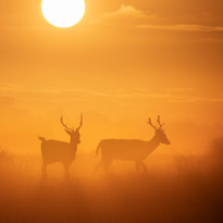 Fallow sunrise