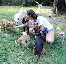 Chiara Daniele istruttore cinofilo Bologna puppy class classi di comuniazione per cani cucciol e adulti