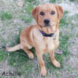 Cani cuccioli in adozione a Bologna