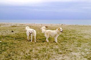 Let's Go Dogs Chiara Daniele educatore cinofilo educazione istruzione addestramento Bologna San Lazzaro Ozzano Emilia Castel San Pietro Pianoro Castenaso Casalecchio