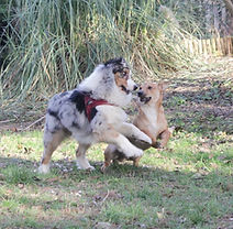 Chiara Daniele educatrice cinofila Bologna puppy classi di socializzazione per cani cuccioli