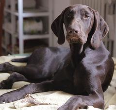 Chiara Daniele Let's Go Dogs Bologna educatore cinofilo istruttore educazione di base cuccioli cani