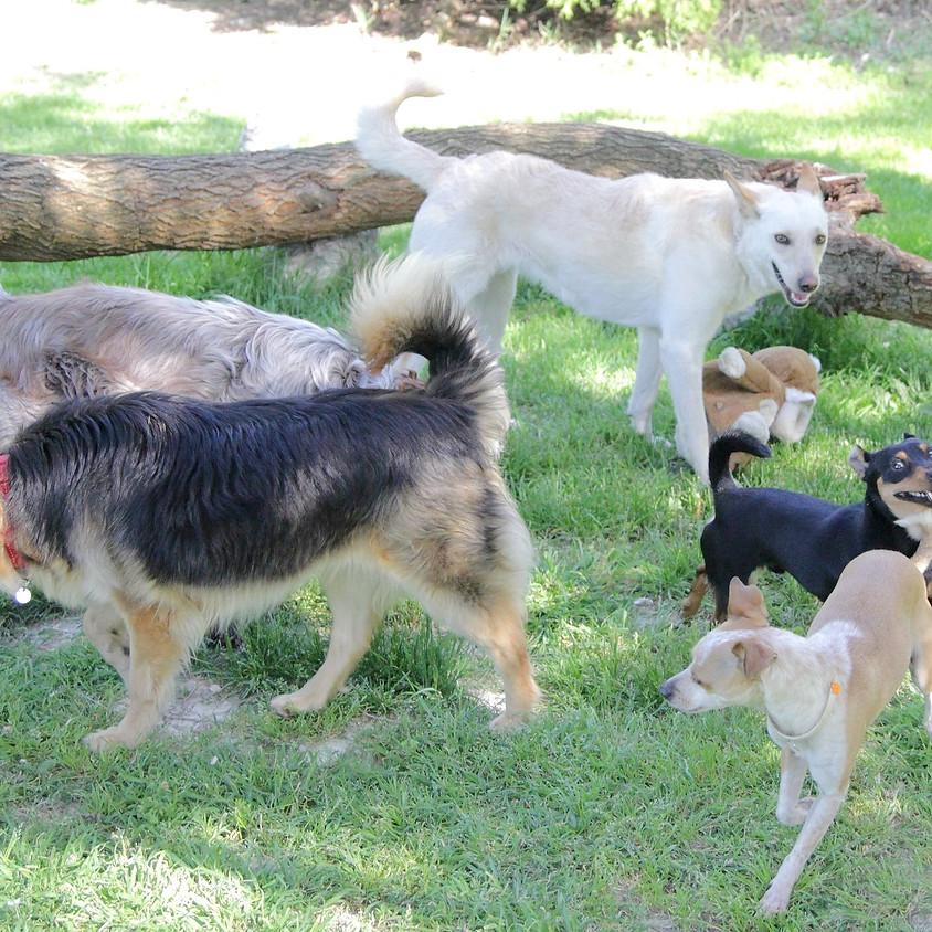 Classi di comunicazione per cuccioloni e cani adulti