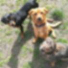 Let's Go Dogs Chiara Daniele educatore cinofilo Bologna cuccioli adozione allevamento