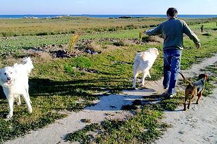 Let's go Dogs Chiara Daniele Educazione cinofila