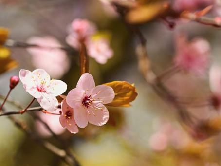 Yoga e Primavera