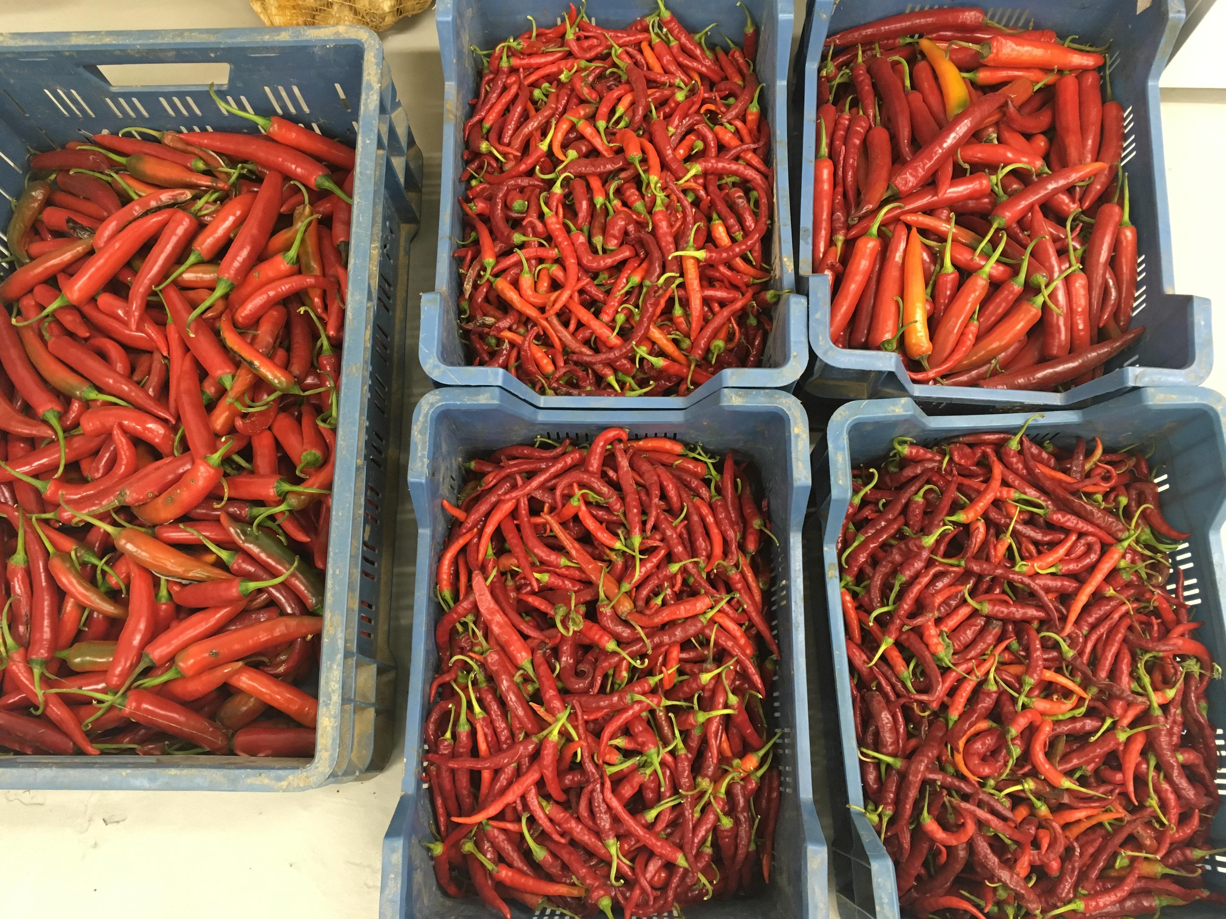Piment rouge à la belge