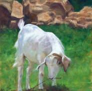 White Goat 18x14.jpg