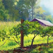 Vineyard Morning 24x36.jpg